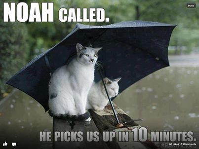 Rain humour
